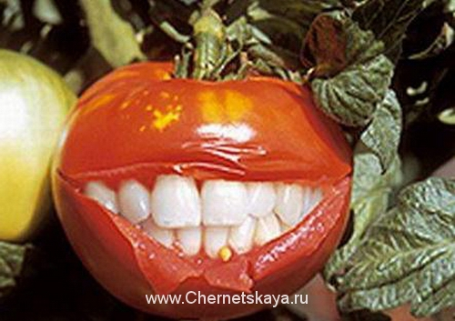 ГМО — что это такое?