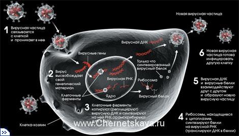 Вирусы — существо или вещество